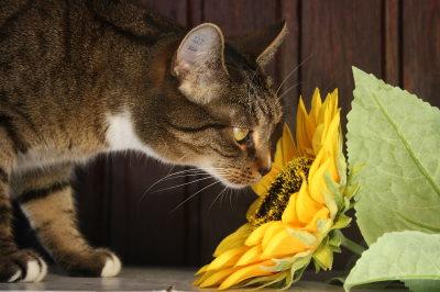 Aromaterapia per animali: oli essenziali per cani e gatti e come usarli
